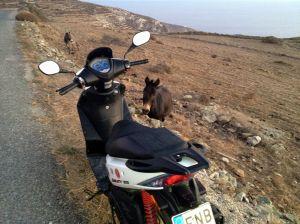 donkey scooter